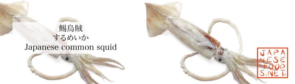 鰑烏賊 するめいか(Japanese common squid)