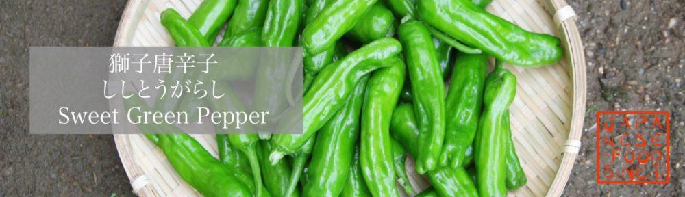 獅子唐辛子 ししとうがらし(Sweet Green Pepper)