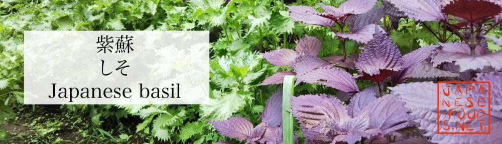 紫蘇 しそ(Japanese basil)