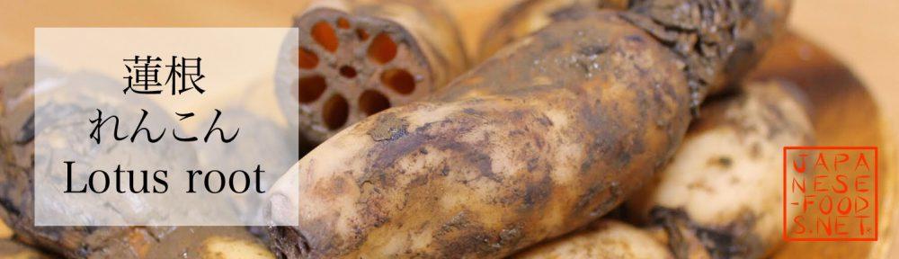 蓮根 れんこん(Lotus root)の特徴と栄養素