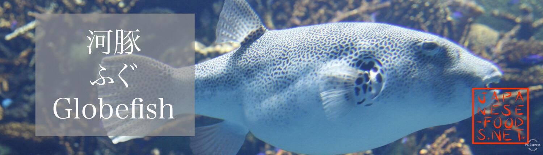 河豚 ふぐ(Globefish)