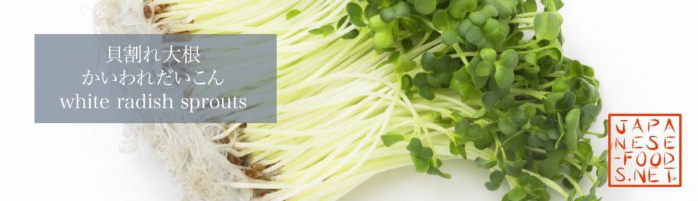 貝割れ大根 かいわれだいこん(white radish sprouts)