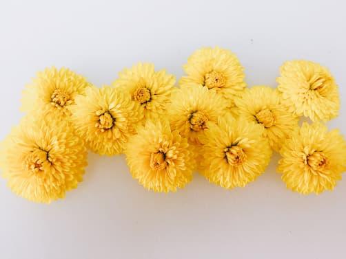 食用菊 しょくようぎく(Edible chrysanthemum)