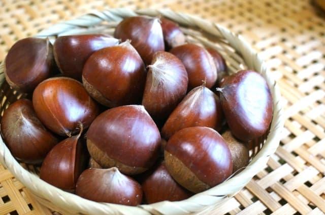 栗 くり(Chestnut)