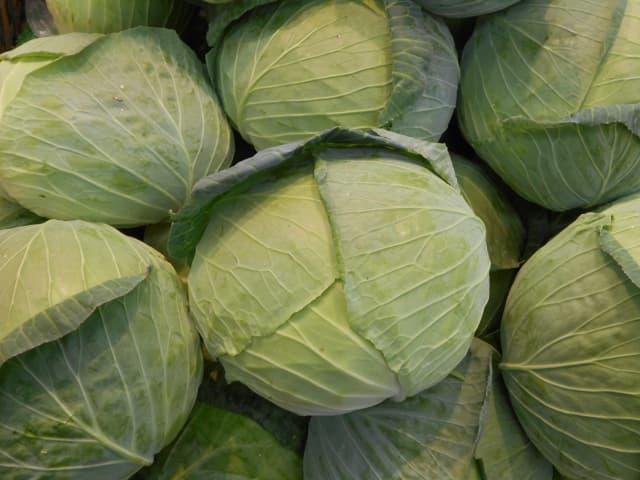 甘藍 キャベツ(Cabbage)