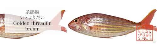 糸撚鯛 いとよりだい(Golden threadfin bream)