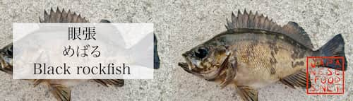眼張 めばる(Black rockfish )