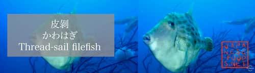 皮剝 かわはぎ(Thread-sail filefish)