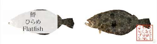 鮃 ひらめ(Flatfish)