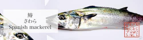 鰆 さわら(Spanish mackerel)