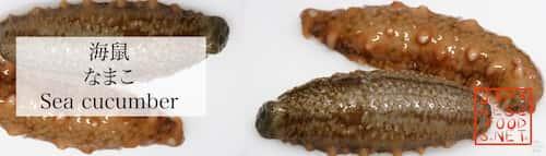 海鼠 なまこ(Sea cucumber)