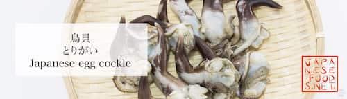 鳥貝 とりがい(Japanese egg cockle)