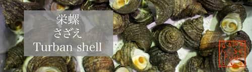 栄螺 さざえ(Turban shell)