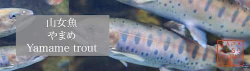 山女魚 やまめ(Yamame trout)
