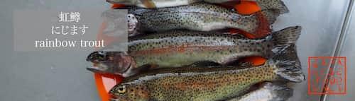 虹鱒 にじます(rainbow trout)