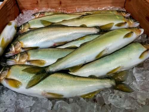 8月|旬の魚介類