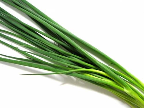 葱 ねぎ(green onion)