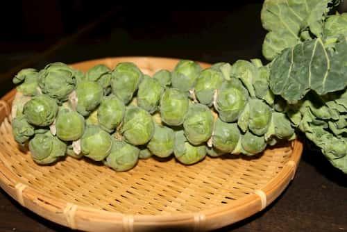 芽甘藍 めきゃべつ(Brussels sprouts)